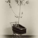 """Sobre """"Somos los que estamos"""" Sobre la obra de David Jara C. Por Miguel Rivera Fellner"""